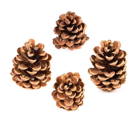 pine cone set of four pieces isolated on white background