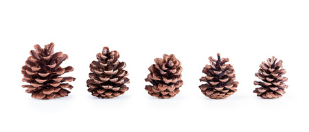 pine cone in a row on the size of five pieces isolated on white background