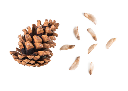pine cone curved with semans top view, isolated, on white background Stock Photo