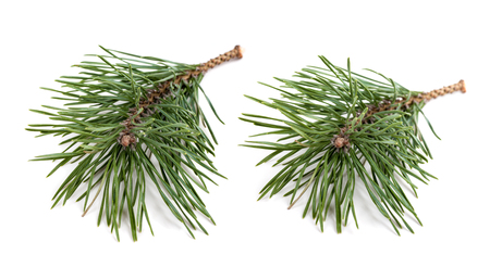 set two spruce branch isolated on white background Stock Photo