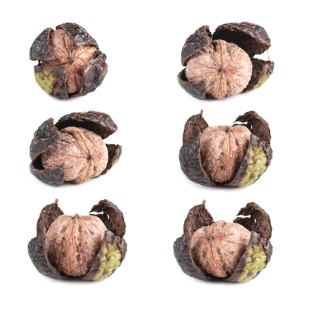 set walnut in green old shell isolated Imagens