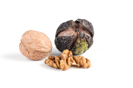 walnut in three stages - chopped, whole and in the shell