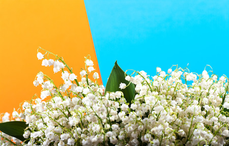 lilies of the valley on a yellow blue background, warm cold shade Stock Photo