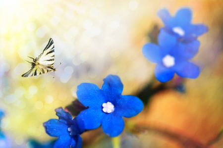 sunny spring morning in bright yellow-blue hues, a butterfly flies on blue flowers, warm cool colors