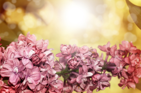 Beautiful spring mood natural background. A branch of lilac on a bright yellow background. A spring image with space for your text.