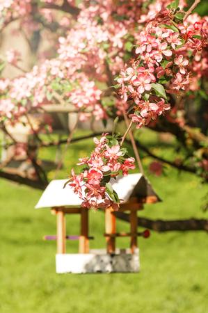 red flowers of apple tree, white bird feeder