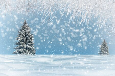 winter landscape, it is snowing, Christmas trees are snowy