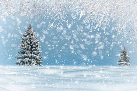 Winterlandschaft, es schneit, Weihnachtsbäume sind verschneit