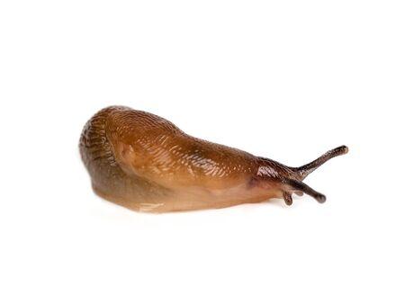 slug isolated on a white background Reklamní fotografie
