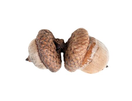 two acorns close-up isolated on a white background
