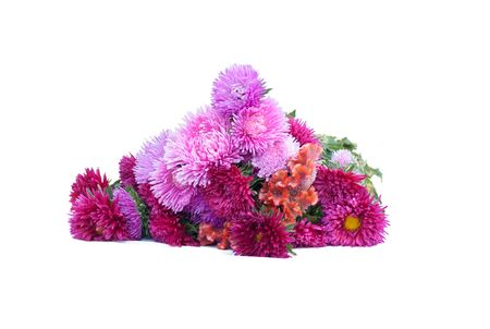 aster flower bouquet on white background isolated