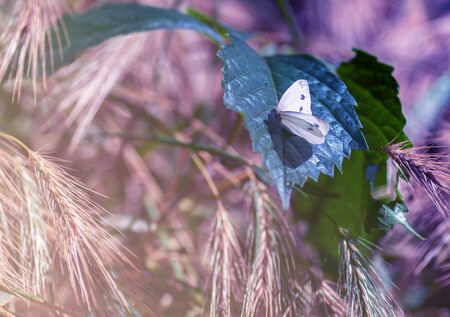 white butterfly on a green leaf among ears, spring mood, close-up, coloring applied Archivio Fotografico - 131923485
