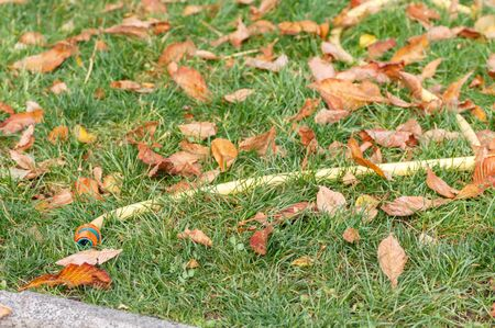 water hose on green grass among fallen leaves in autumn in the park