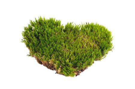 green moss,heart shape, sphagnum closeup isolated