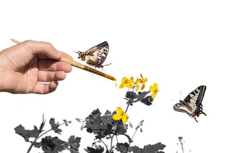 male hand with a brush paints yellow flowers, a butterfly sits on a brush isolated on a white background