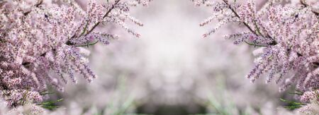 panorama of blooming pink trees, spring background Stock Photo