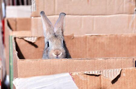 decorative rabbit peeks out of a cardboard box