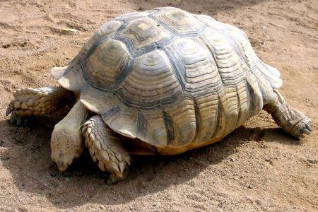 Big turtle on the sand