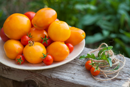 lycopene: harvest of tomatoes on plate in a garden with flowers Stock Photo