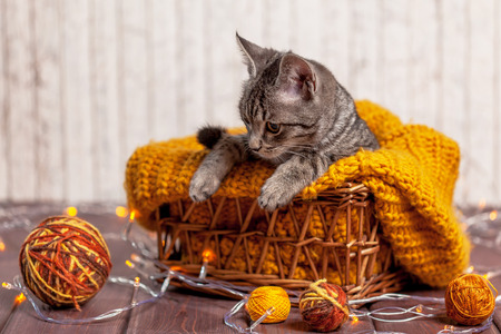 pussy: kitten playing with a ball of wool in basket