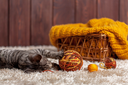 pussy: kitten playing with a ball of wool