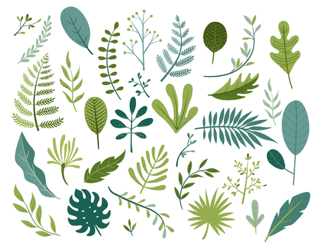 Set van verschillende tropische en andere geïsoleerde groene bladeren. Palm, bananenblad, hibiscus, plumeria, splitblad, philodendron. Jungle collectie voor uw ontwerp. Vectorillustratie.