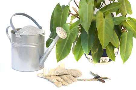 snipping: pruning shears and garden gloves isolated on white with plant and watering  Stock Photo