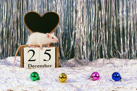 White rat sitting on wooden calendar with christmas decorations, symbol of the new year 2020 Banco de Imagens