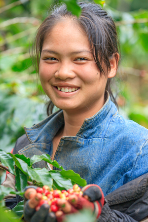 Pakse, Laos – October 27, 2010: Laos girl coffee farmer is smiling for photo with coffee berries on hands in coffee farm on Bolaven Plateau. Champasak Province. Laos PDR.