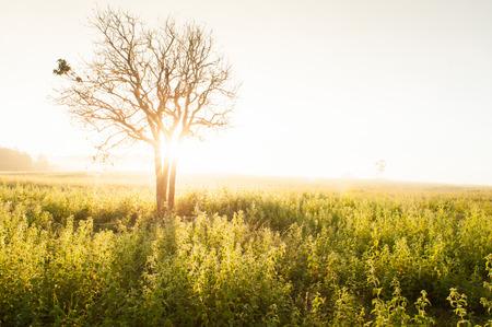 Golden sunrise shines down around the grassland and wild tree. Spring season. golden mist background. Cobweb hanging on the tree.