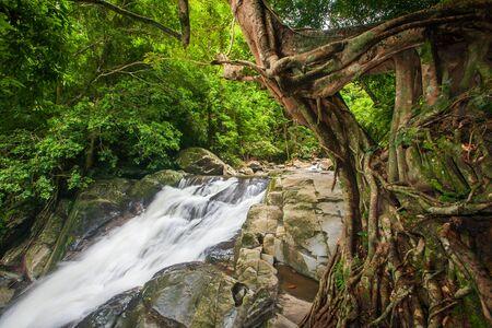 Tropical forest in rainy season, ancient banyan tree with moss and lichen foreground, waterfall background. Rainy season. Soft sunlight. Long exposure. Pala-U Waterfall, Kaeng Krachan National Park, Thailand.