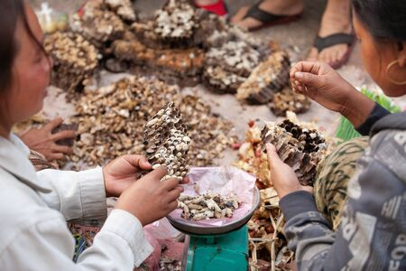 Simple life. A lot of Paper wasp nest with larva in Laos woman hands, local exotic food in Laos and southeast asia. daily morning market at Luang Prabang, Selective focus. Фото со стока - 130795239