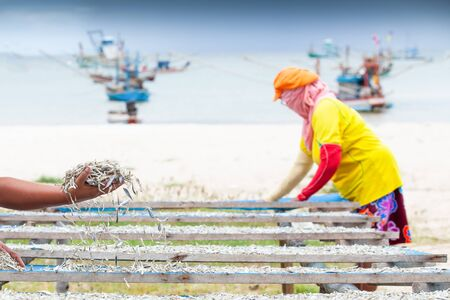 Simple life, Thai woman laying down fish on the net for drying, harbor and traditional fishing boat backgrounds. Rainy season. Fisherman village, Chumphon, Thailand. Local wisdom.