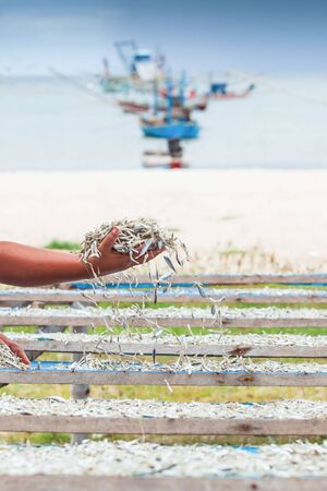 Simple life, Thai women laying down fish on the net for drying, harbor and traditional fishing boat backgrounds. Rainy season. Chumphon, Thailand. Local wisdom. Close. Shallow dept of field.