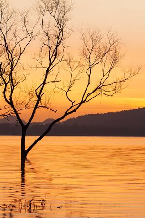 Peaceful sunset time, beautiful sunset sky, twilight reflecting in the lake, gently ripple wave. Mountain backgrounds. Fantastic shape of dead trees foregrounds. Thailand. Silhouette. Stock fotó