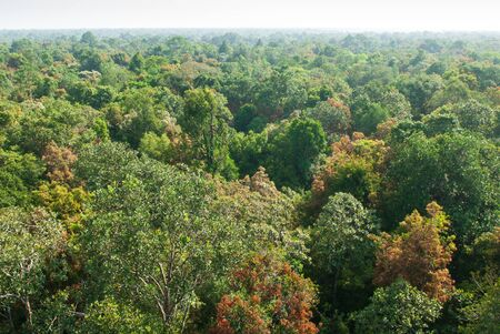 Aerial view, sunrise shines down around peat swamp forest, beautiful shaped, shadow and green canopy. Sirindhorn Peat Swamp Forest Nature Research and Study Centre, Narathiwat, Thailand. Summer season. Copy space.