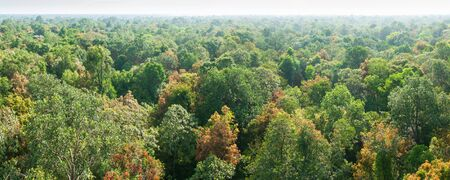 Panorama, aerial view. Sunrise shines down around peat swamp forest, beautiful shaped, shadow and green canopy. Sirindhorn Peat Swamp Forest Nature Research and Study Centre, Narathiwat, Thailand. Summer season. Copy space.