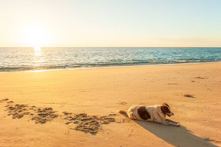 Happy thai dog relaxing or sunbathe on golden sand beach under warm sunset light. Tai Muang Beach, Phang Nga, Thailand. Summer season. Cute and humor. Copy space.