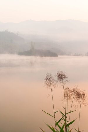Peaceful place, Pa Khong Lake in morning light in winter season, soft mist covers on the lake and mountains. Scenic landscape of Dien Bien, Vietnam. Warm tone. Focus on kans grass.
