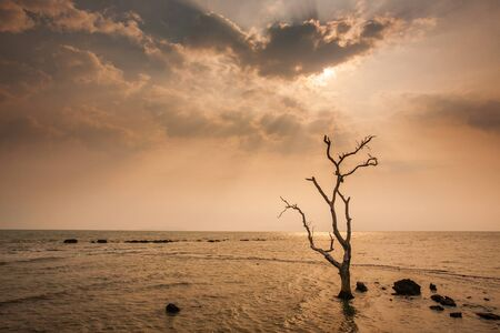 A lonely dead tree stand by the sea, dramatic storm dark cloudy sky over sea. Abandoned dead tree in storm sea. Boiling, climate change, global warming. Low key.