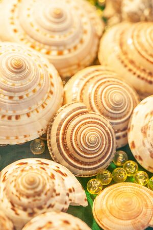 Top view of exotic spiral sea shells with crystal balls marbles on green velvet. Beautiful bokeh and blurred backgrounds. Close up. Shallow dept of field. Selective focus.