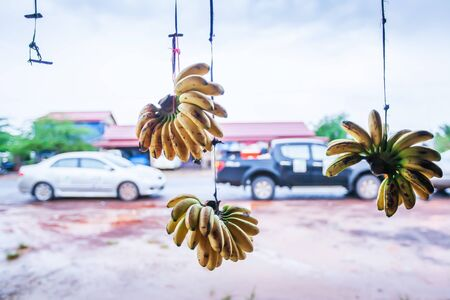 Daily life of country road in Koh Kong, South Cambodia, view from inside a local store looking out, ripe bananas hanging in front of the grocery store, cars on the roadside backdrop. Focus on bananas.