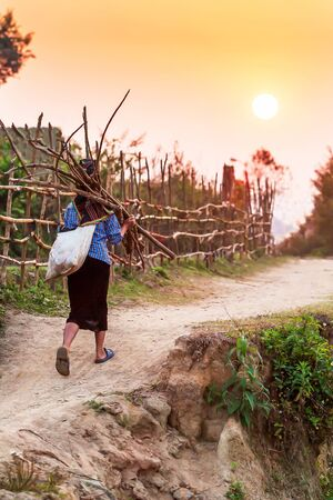 Simple lifestyle, a senior vietnamese woman carrying a bundle of firewood while walking on a country pathway at dusk, beautiful sun setting behind old village, rural scene in Dien Bien Phu, Vietnam.