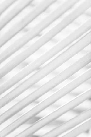 Black and White, abstract of palm leaves on palm leaves blur backgrounds, bright transparent, art shape and lines of leaves. Minimal concept. Soft focus. Фото со стока