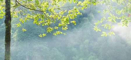A tranquil morning landscape on a mountains, sunrise shines on branches of tropical tree, bright transparent of green leaves, fresh fog covers evergreen forest backgrounds. Thailand-Cambodia border. Reklamní fotografie