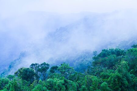 Wonderful scenery of primary forest in blue misty, fresh wild flowers are in bloom foregrounds. Preah Monivong Bokor National Park, Kampot, Cambodia.