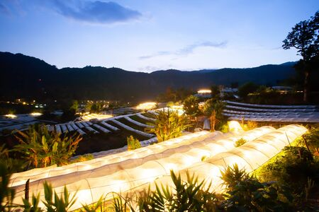 Rows of greenhouse in the valley at twilight with lights on inside, greenhouse use specific wavelengths of light to boost the growth. Chiang Mai, Thailand. Agriculture concept.