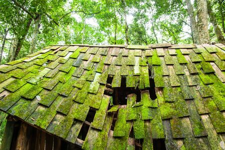 An old wooden cabin with lush moss and lichen on the wooden roof, old abandoned wooden cabin in a tropical forest in springtime.