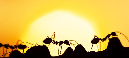 Magical scene of Green Ants walking in a vine on summer dusk, art shape of ants against golden sunset in the background. Social communication concept.
