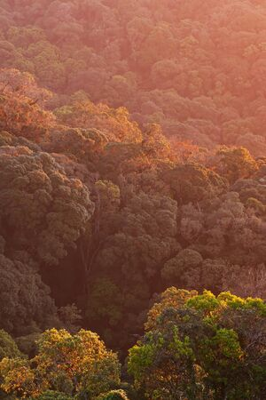 Magical aerial view of canopy of primeval forest, warm sunrise shines onto canopy and branches of ancient trees. Himalayas mountain range.